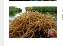 Ahli-biologi-laut-Indonesia-paparkan-disertasi-di-Belgia